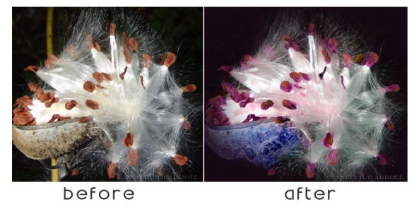 Digital Image Manipulation - Before and After